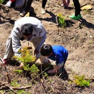 その木どこの木 違法伐採と森林認証